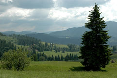 Naturaleza, Lanscape Imagen de archivo libre de regalías