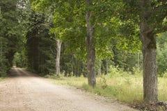 Naturaleza letona Fotos de archivo