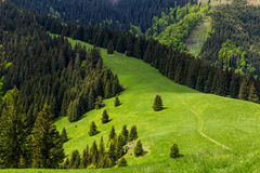 Naturaleza a lo largo de la manera de ciclo de Malino Brdo a Revuce en Slova Imágenes de archivo libres de regalías