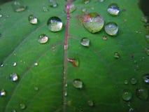 Naturaleza mágica Fotos de archivo libres de regalías