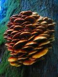 Naturaleza mágica Foto de archivo libre de regalías