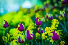 Naturaleza mágica de los lillies Imágenes de archivo libres de regalías