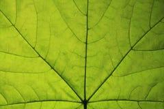 Naturaleza macra. Imagen de archivo