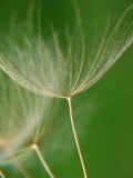 Naturaleza macra Fotografía de archivo libre de regalías