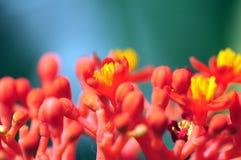 Naturaleza macra Imágenes de archivo libres de regalías