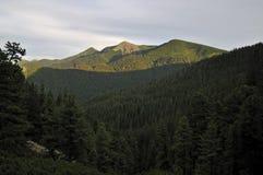Naturaleza. Maderas y montañas. Fotografía de archivo