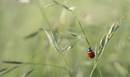 Naturaleza, mariquita, insecto Foto de archivo