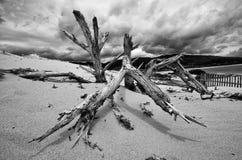Naturaleza muerta Foto de archivo libre de regalías