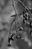 Naturaleza muerta Imágenes de archivo libres de regalías