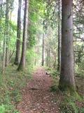 Naturaleza noruega foto de archivo libre de regalías