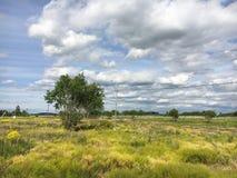 Naturaleza Nubes de cúmulo Prado Foto de archivo