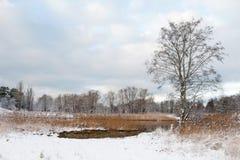 Naturaleza Paisaje del invierno con el árbol, el río y la nieve Fotos de archivo
