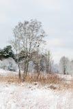 Naturaleza Paisaje del invierno con el árbol, el río y la nieve Imagenes de archivo