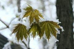 Naturaleza, parques, invierno, concepto al aire libre Hojas coloridas fotografía de archivo libre de regalías