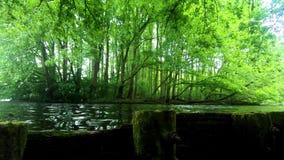 Naturaleza que sorprende al aire libre del viaje del parque almacen de video