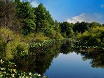 Naturaleza reflejada Fotografía de archivo libre de regalías
