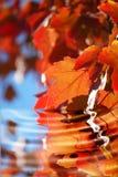 Naturaleza reflejada imagen de archivo libre de regalías