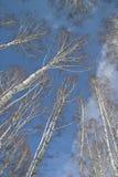 Naturaleza rusa imagen de archivo