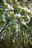 Naturaleza rusa Fotos de archivo