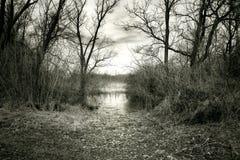 Naturaleza salvaje Imagen de archivo libre de regalías