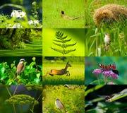 Naturaleza salvaje Foto de archivo