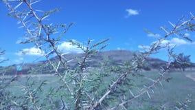 Naturaleza salvaje Imagen de archivo