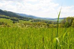 Naturaleza salvaje salvaje de la monta?a el la primavera foto de archivo libre de regalías