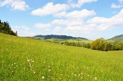 Naturaleza salvaje salvaje de la primavera de la montaña foto de archivo