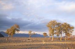 Naturaleza salvaje de Mongolia occidental foto de archivo