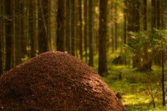 Naturaleza salvaje del hormiguero contra la perspectiva de árboles forestales coníferos teniendo en cuenta el sol de la mañana fotos de archivo