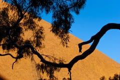 Naturaleza salvaje en el australiano interior Fotos de archivo libres de regalías