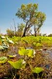 Naturaleza salvaje en el parque nacional de Kakadu, Australia Imagen de archivo