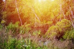 Naturaleza salvaje sin la gente Fotos de archivo libres de regalías