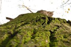 Naturaleza Serbia Foto de archivo