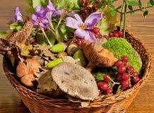 Naturaleza siciliana del otoño Fotos de archivo libres de regalías