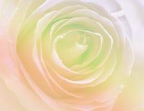 Naturaleza suave del verano de la tarjeta del día de San Valentín del color de fondo color de rosa floral foto de archivo