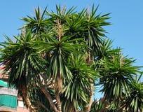 naturaleza urbana tropical imágenes de archivo libres de regalías
