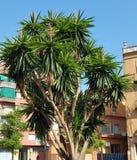 naturaleza urbana tropical fotografía de archivo