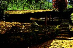 Naturaleza Valparai de la sombra Fotos de archivo