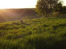 Naturaleza, verano, puesta del sol, ² иÐ?, † е del 'Ð del  Ñ del ¹ Ñ del ¾ Ð del ¾ кРdel ¿Ð del  Ð de Ñ del ½ Ñ de Ð del ¾  fotos de archivo
