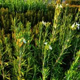 Naturaleza verde Fotos de archivo libres de regalías