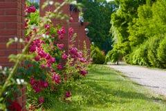 Naturaleza verde Imágenes de archivo libres de regalías