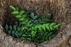 Naturaleza verde Fotos de archivo