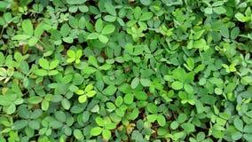 Naturaleza verde de la hoja Fotografía de archivo