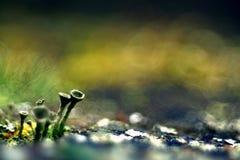 Naturaleza verde de la macro del microcosmos del musgo fotos de archivo