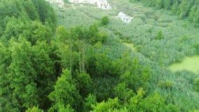 Naturaleza verde del pantano del bosque de la opinión aérea del paisaje almacen de video