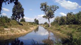 Naturaleza verde en la reflexión en el agua Foto de archivo libre de regalías