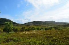 Naturaleza verde enorme y opinión pavimentada del camino en la Noruega septentrional Imágenes de archivo libres de regalías