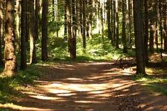 Naturaleza verde más forrest