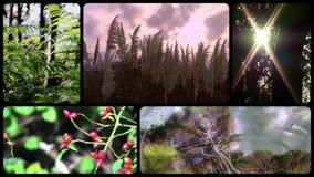 Naturaleza verde, montaje almacen de metraje de vídeo